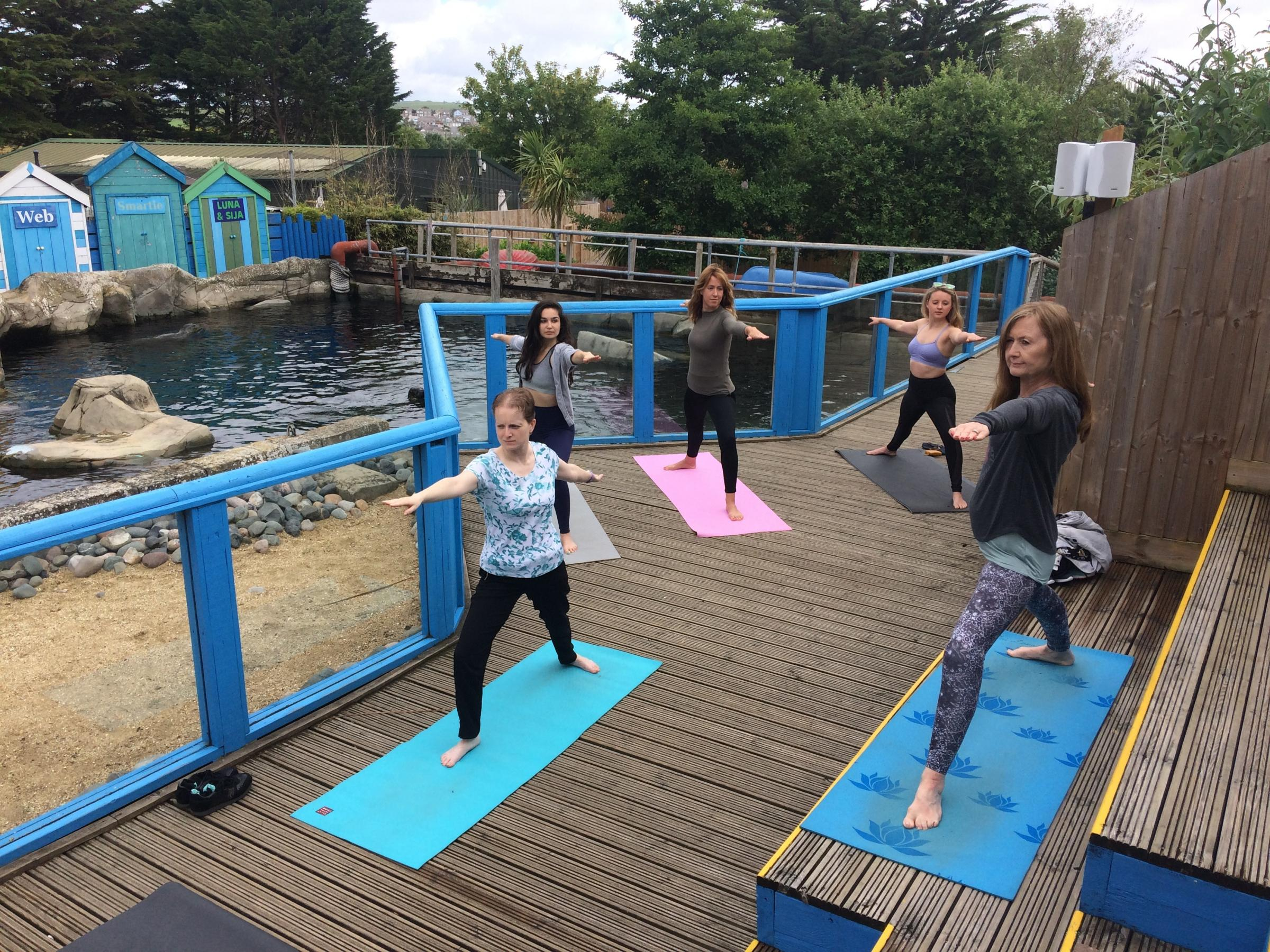 Seals watch as Sea Life park visitors take part in special yoga classes