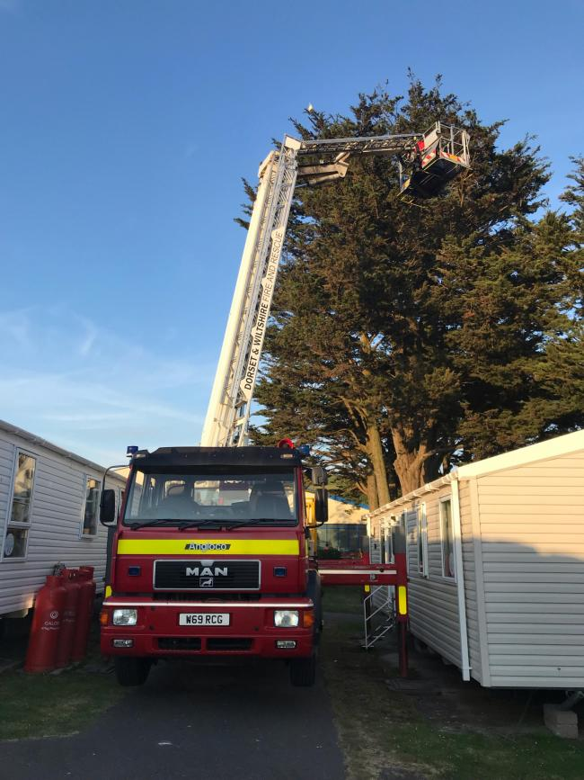 Firefighters rescue the trapped bird              Picture: Dorset and Wiltshire Fire and Rescue