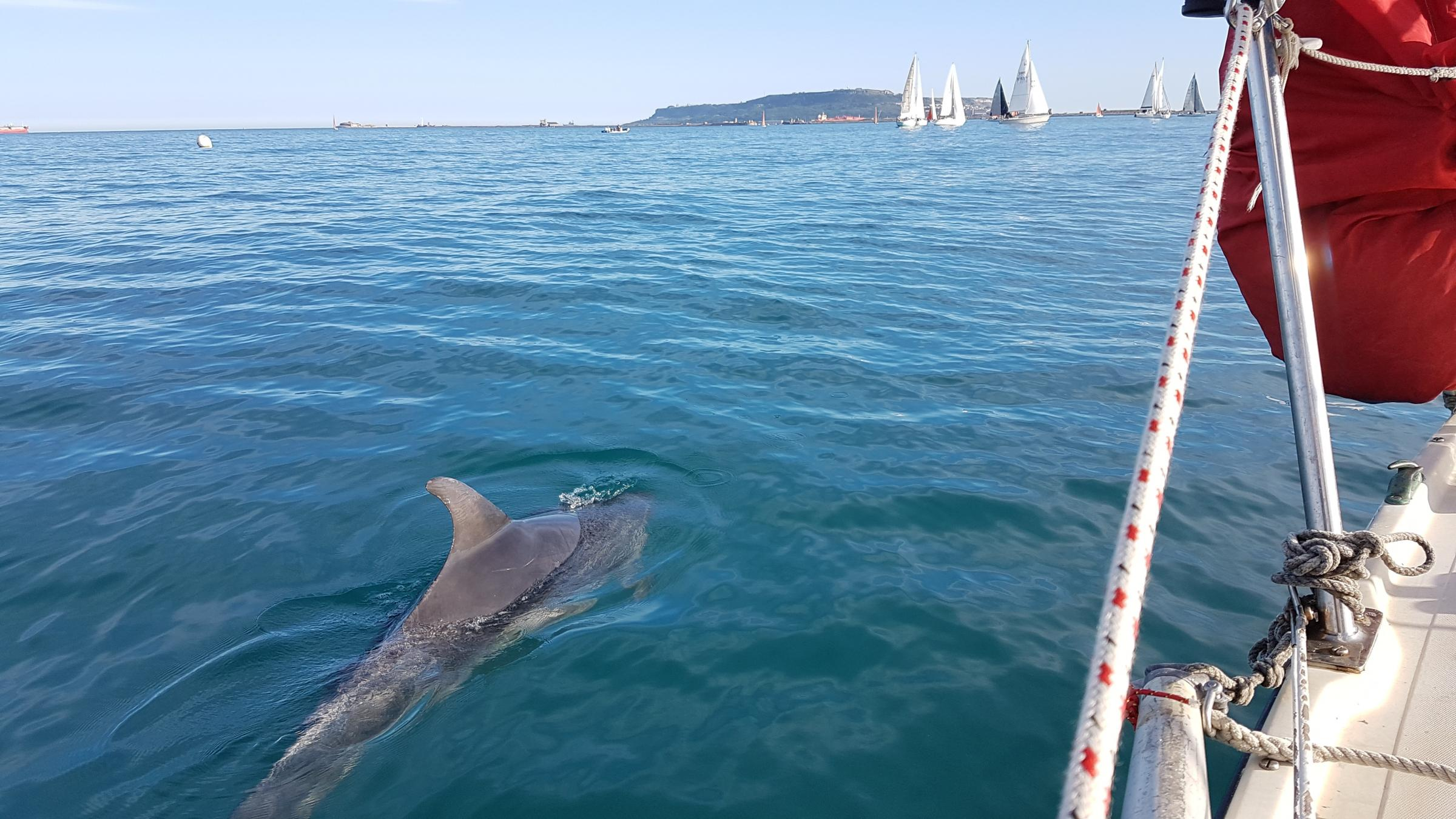 Weymouth Bay sailors visited by Danny the Dolphin