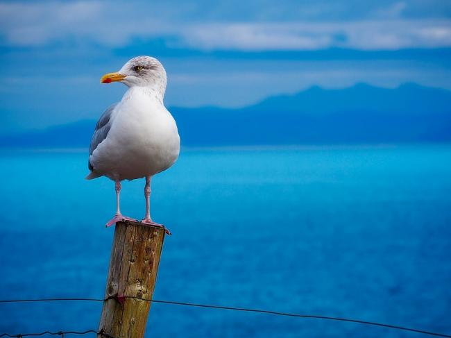 Stock picture of seagull (probably not 'Jeremy Livingstone')