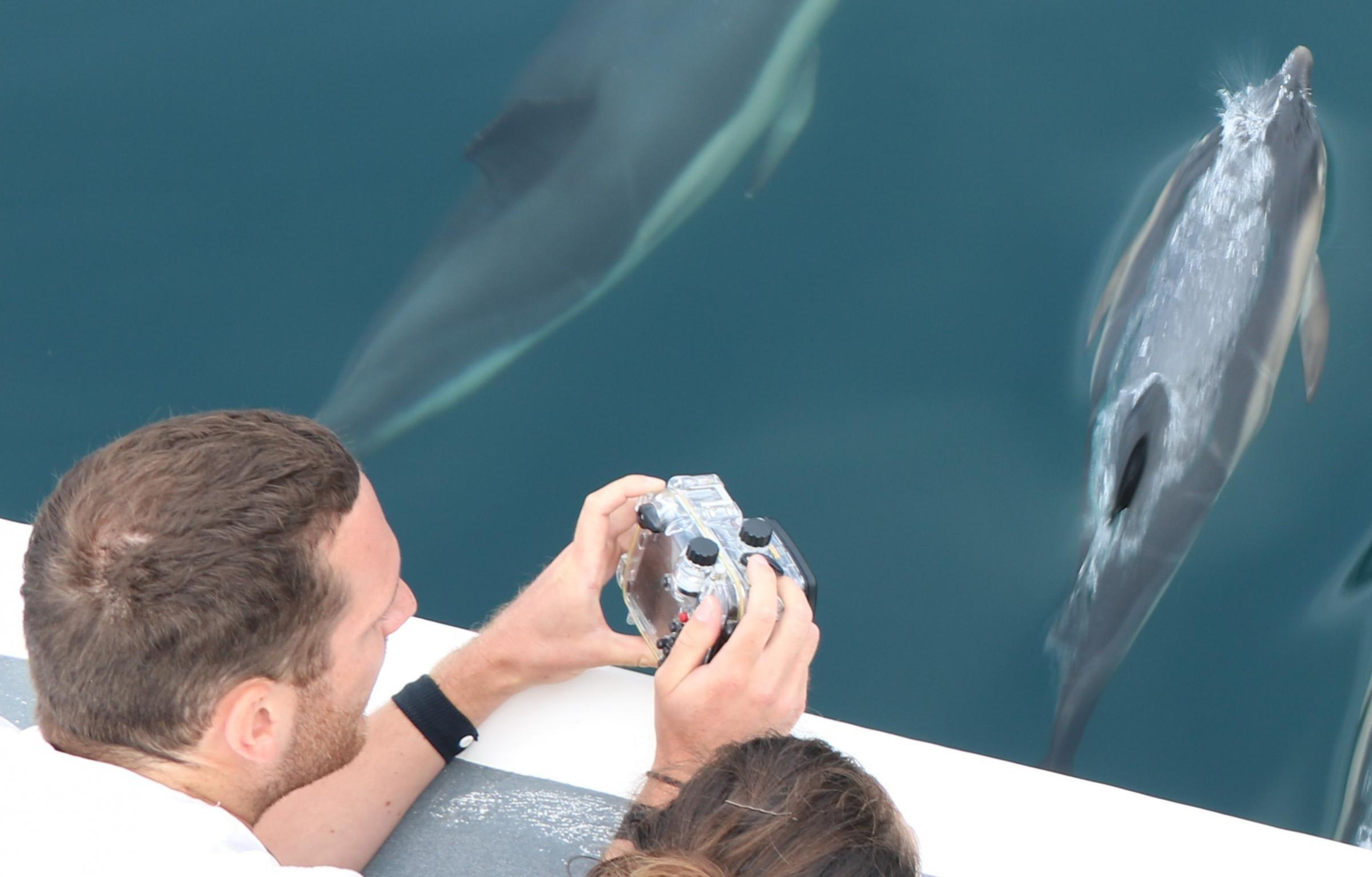 Dorset residents urged to protect whales, dolphins and porpoises with citizen science