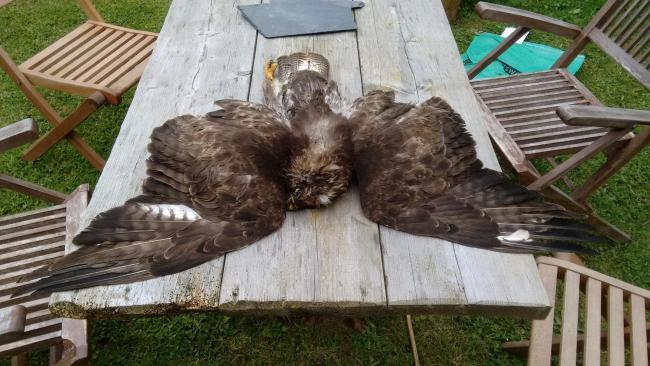 Bird of prey killings spark calls for independent review