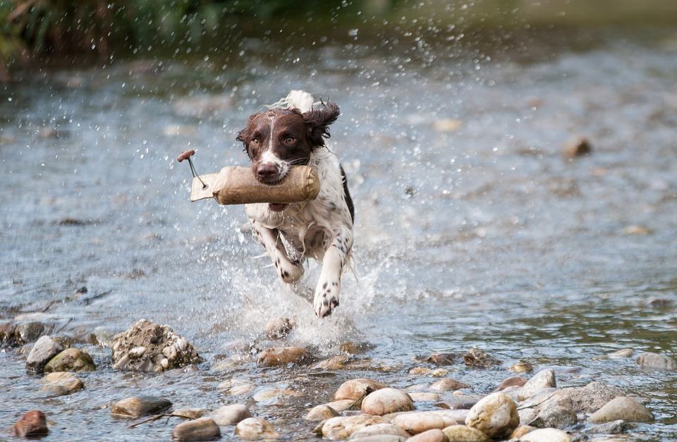 Vets column: As town gears up for Ironman, here's why your dog should keep fit
