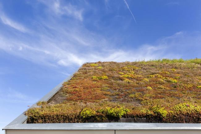 A living roof. Picture: iStock/PA.