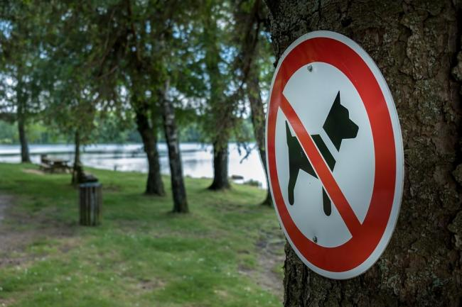 Our reader highlights the risks associated with dog fouling. Picture: Pixabay