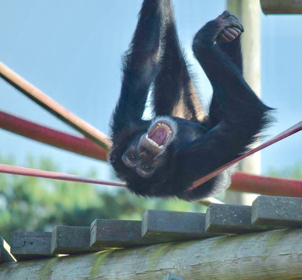 Monkey World to feature on the small screen once again as series returns