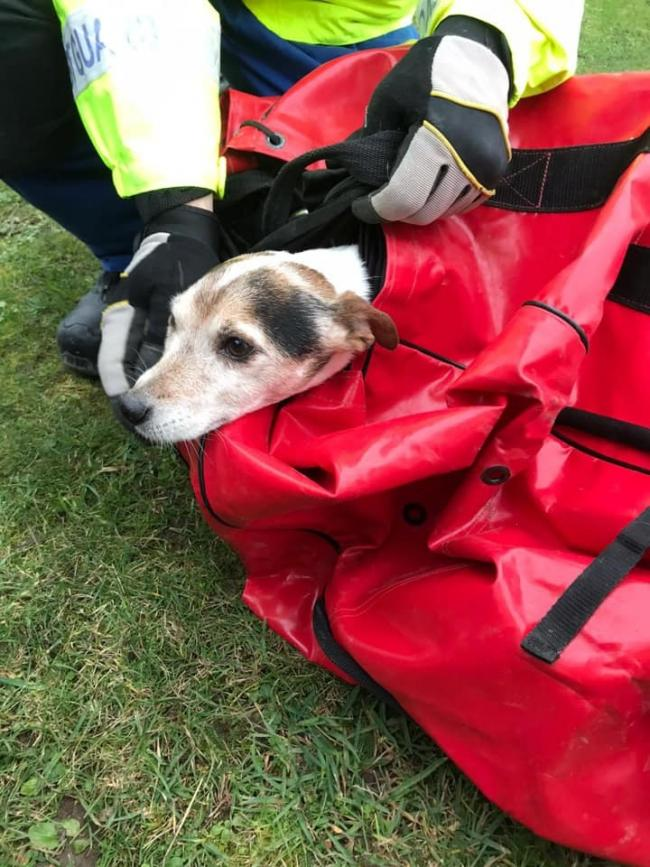 A dog was safely rescued      Picture: Portland Bill Coastguard Rescue Team