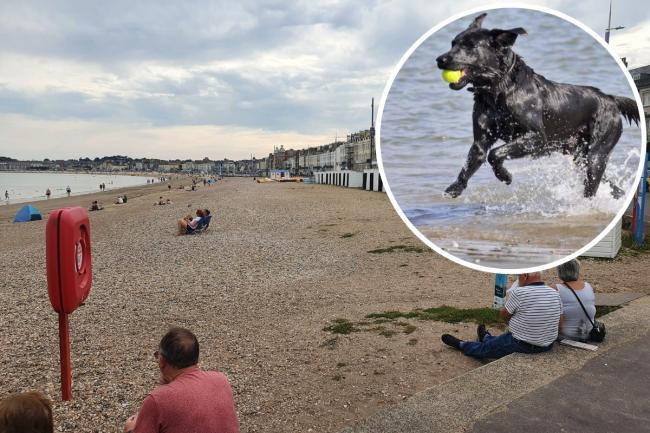 Plan to change rules for dogs on Weymouth Beach