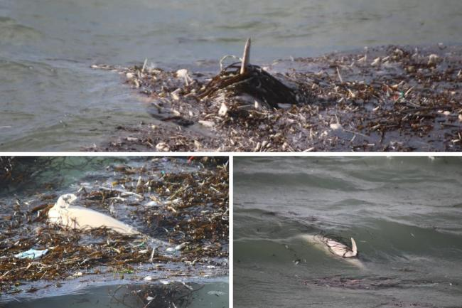 Dead sea mammals have been sighted at Chesil Beach, Portland Pictures: Dave Taylor