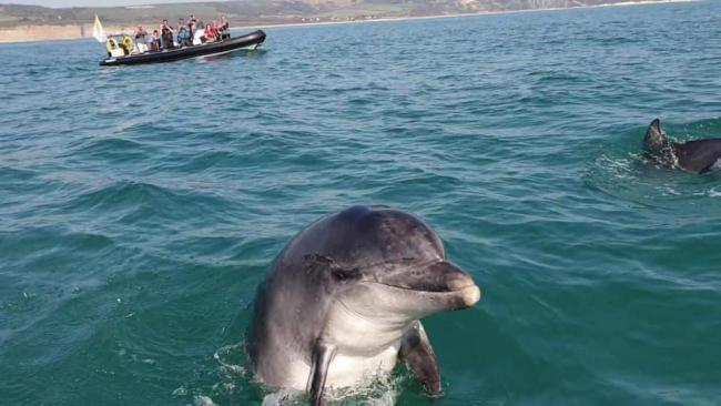 Weymouth residents are devastated by the death of Danny the dolphin Picture: Jurassic Jet Ski Tours