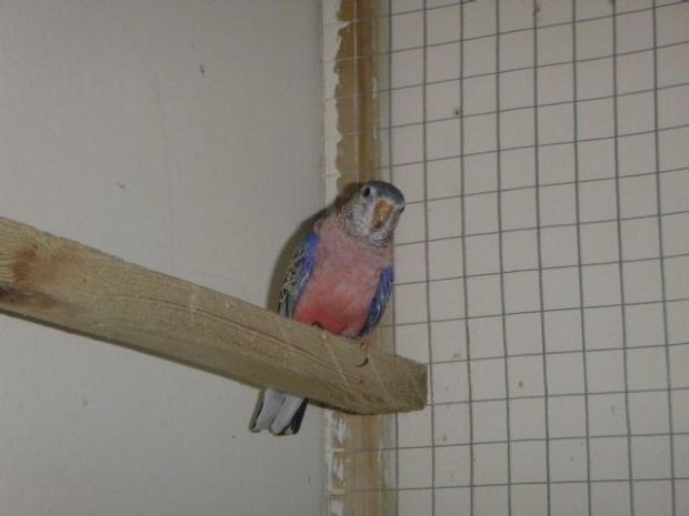 Dorset Echo: One of the three living birds found at the flat. Picture: RSPCA