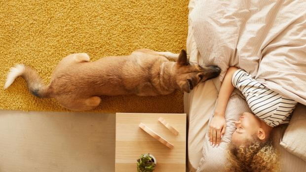 Dorset Echo: At the end of the day, what matters most is what works for you and your pet. Credit: Getty Images / AnnaStills