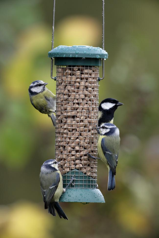Picture: Nigel Blake/rspb-images.com/PA