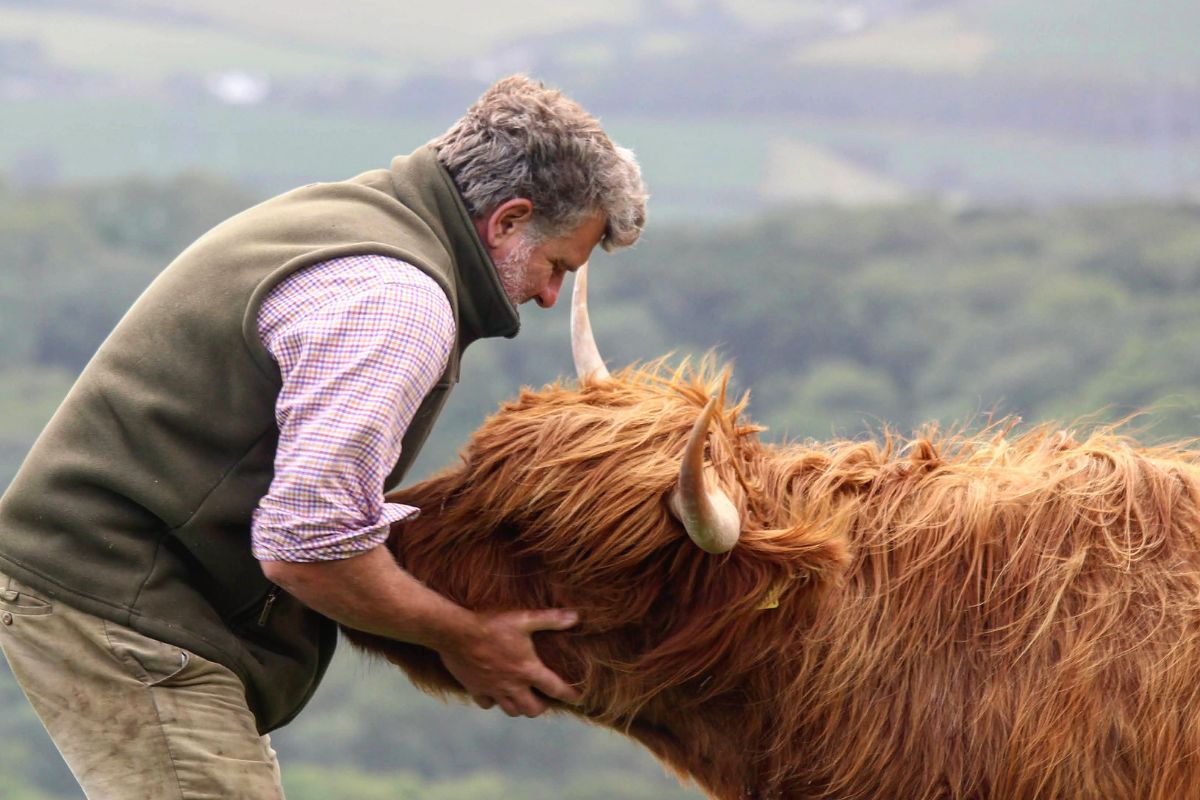 Death of Gladis the cow sparks West Dorset livestock campaign