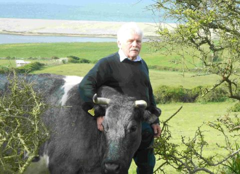 SADDENED: Farmer Doug Timms with Alexis, the cow whose calf was savagely killed