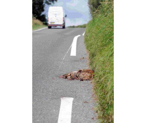 Dorset Echo: The white line painted around the dead fox