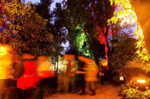 LIGHT FANTASTIC: Ghostly figures meander through the spectacularly backlit foliage at Abbotsbury Subtropical Gardens