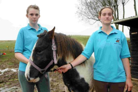 A PONY was left with gaping wounds on its head after being savaged by a dog in Weymouth.
