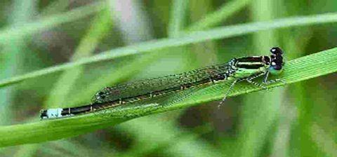 Rare insect species found at wildlife reserve