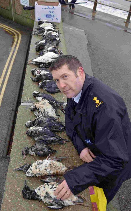 TOLL: RSPCA John Pollard with dead birds
