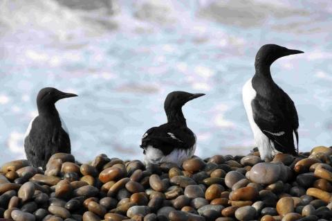 Dorset Echo: HARMED: THE true number of birds caught up may never be known