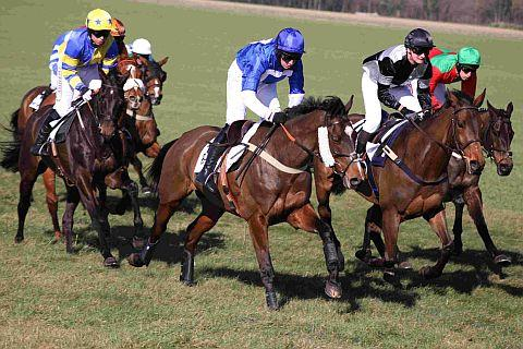LEADING LIGHTS: Competitive action from last year's meeting at Badbury Rings