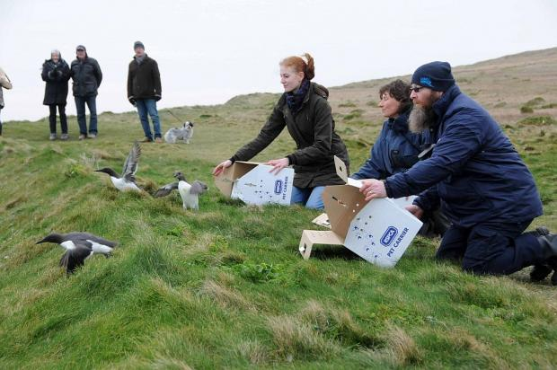Oil stricken birds released from Portland Bill