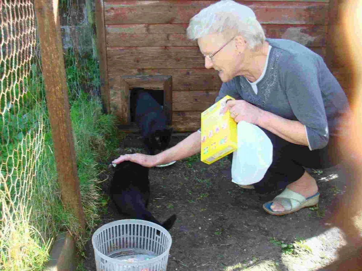 Feral cat George with foster carer Pat Aplin