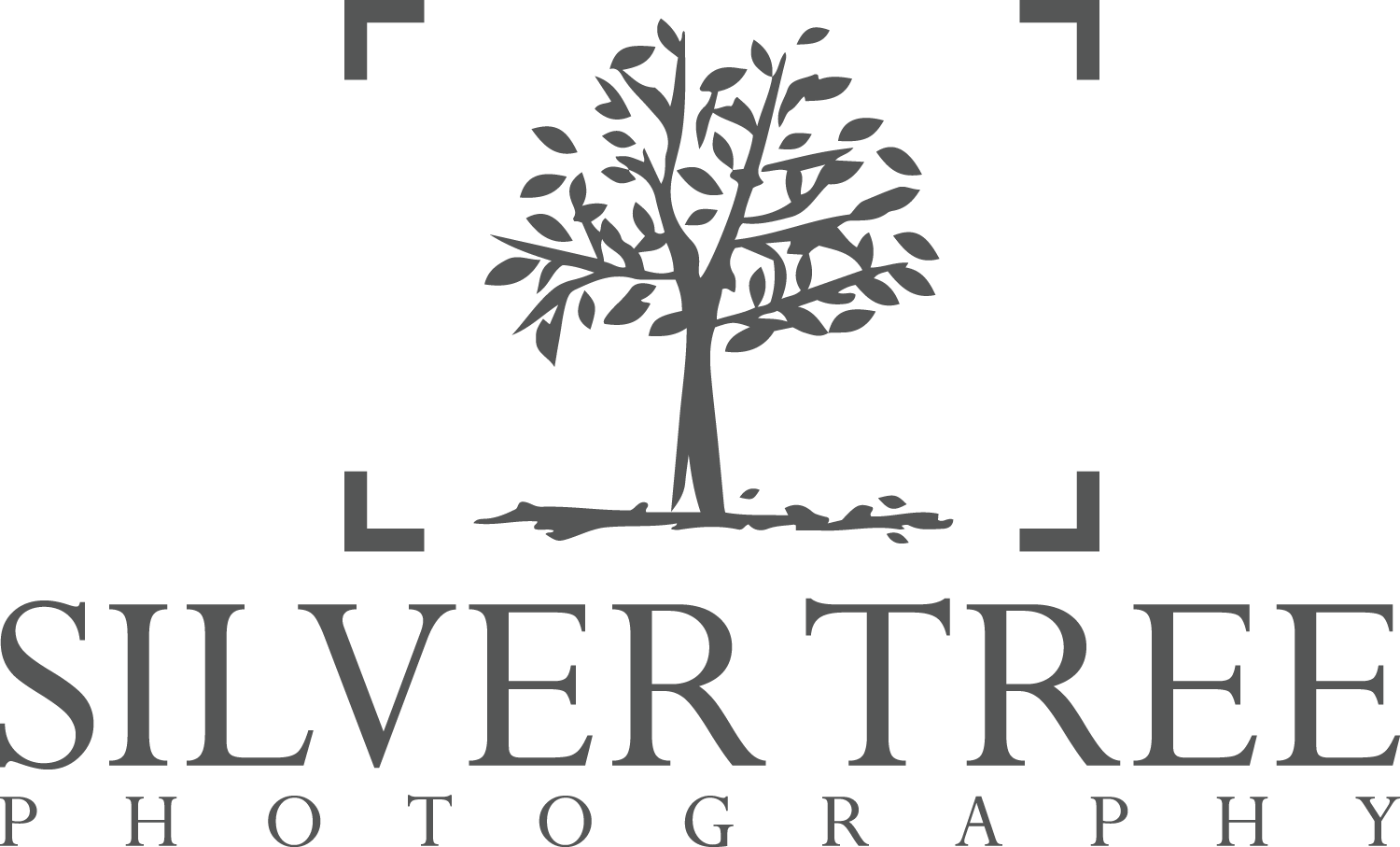 Silver Tree Photography