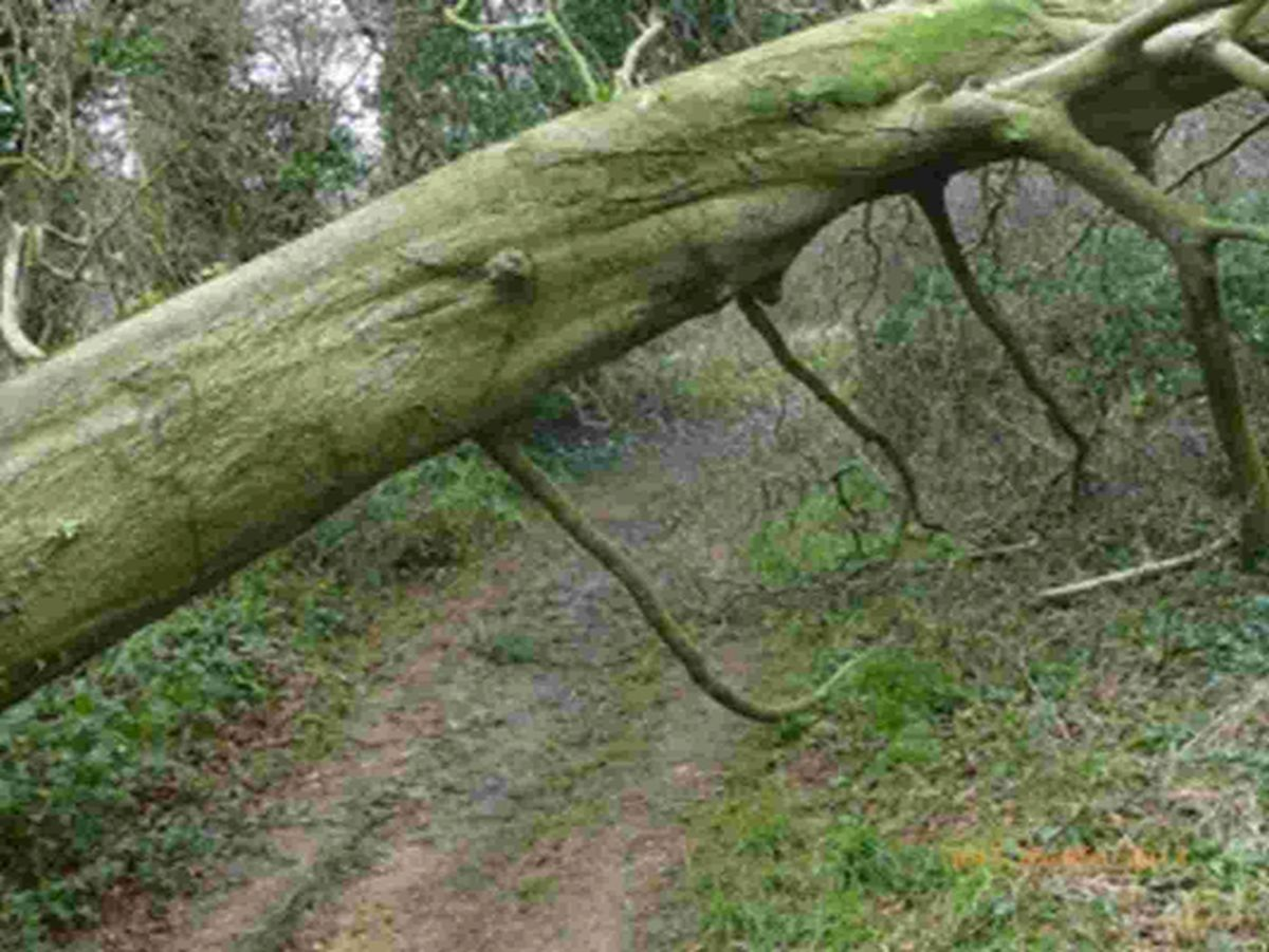 Warning for West Dorset walkers over fallen trees