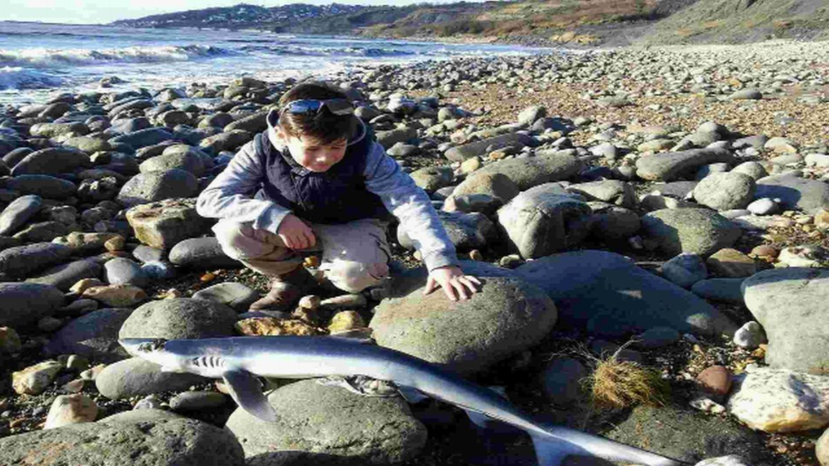 Family shock at finding shark on Charmouth beach