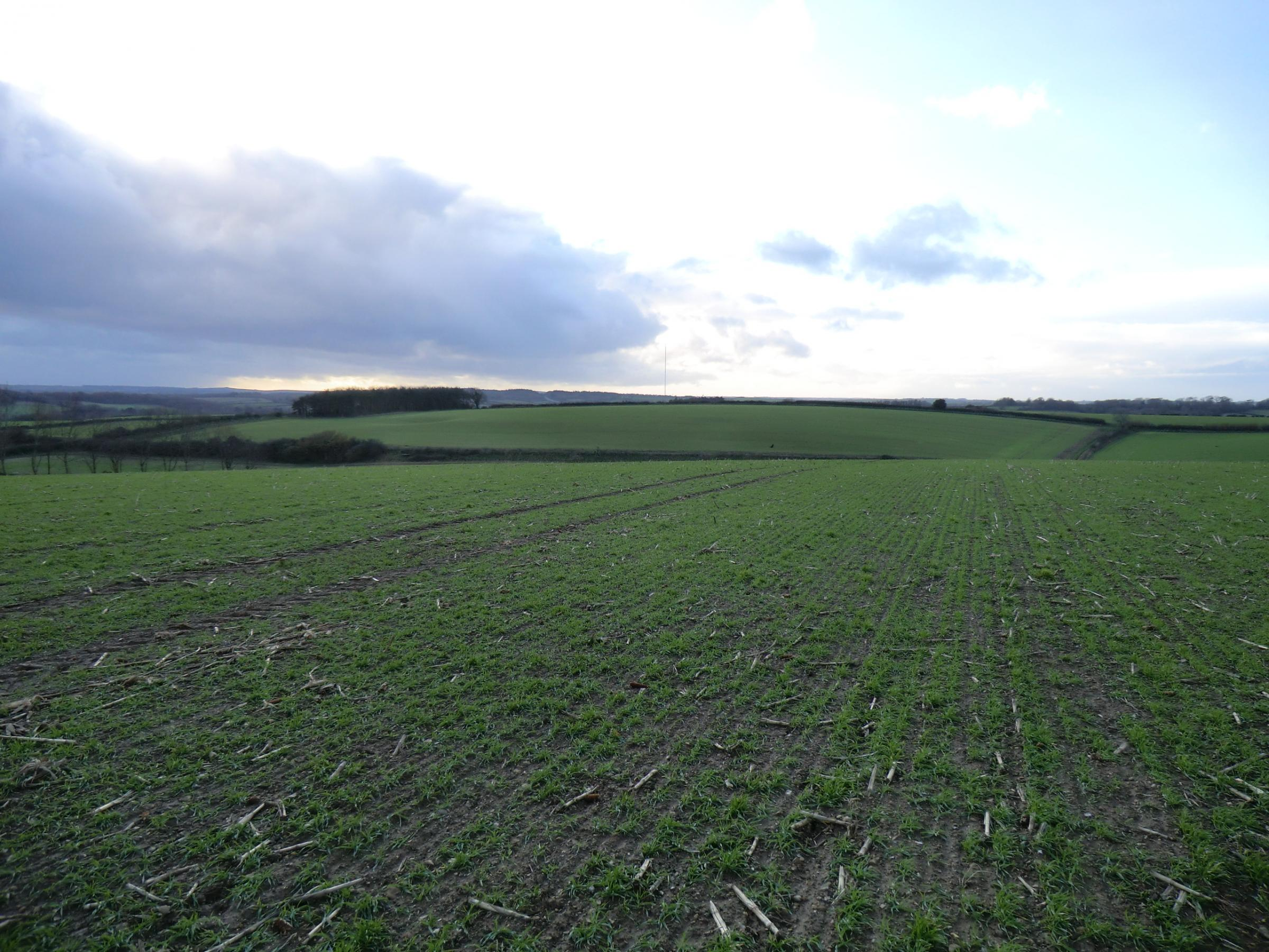 The proposed site for the wind farm near Tolpuddle