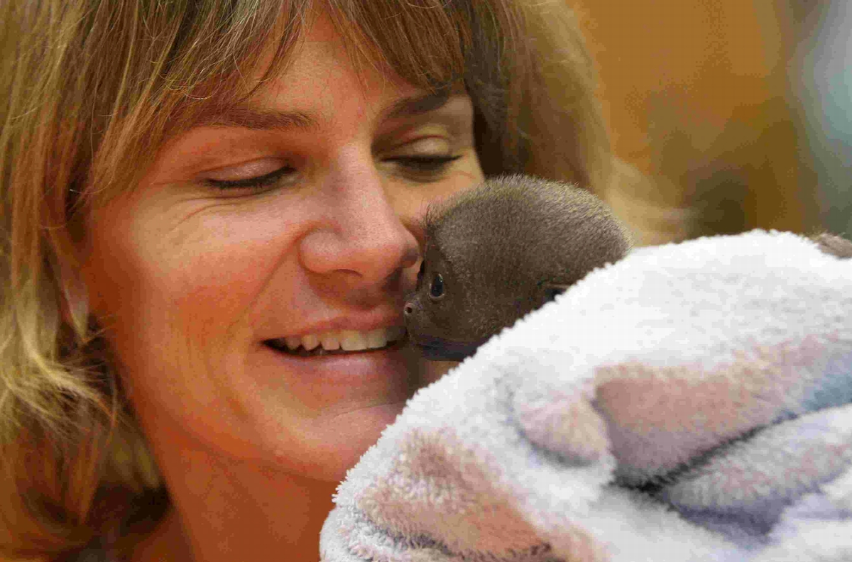 WELFARE PROBLEMS: Dr Alison Cronin with a baby monkey