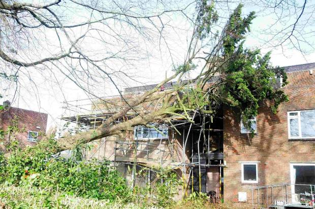 Dorset Echo: TIMBER: A tree which fell against the flats during the storms at Cowley Close
