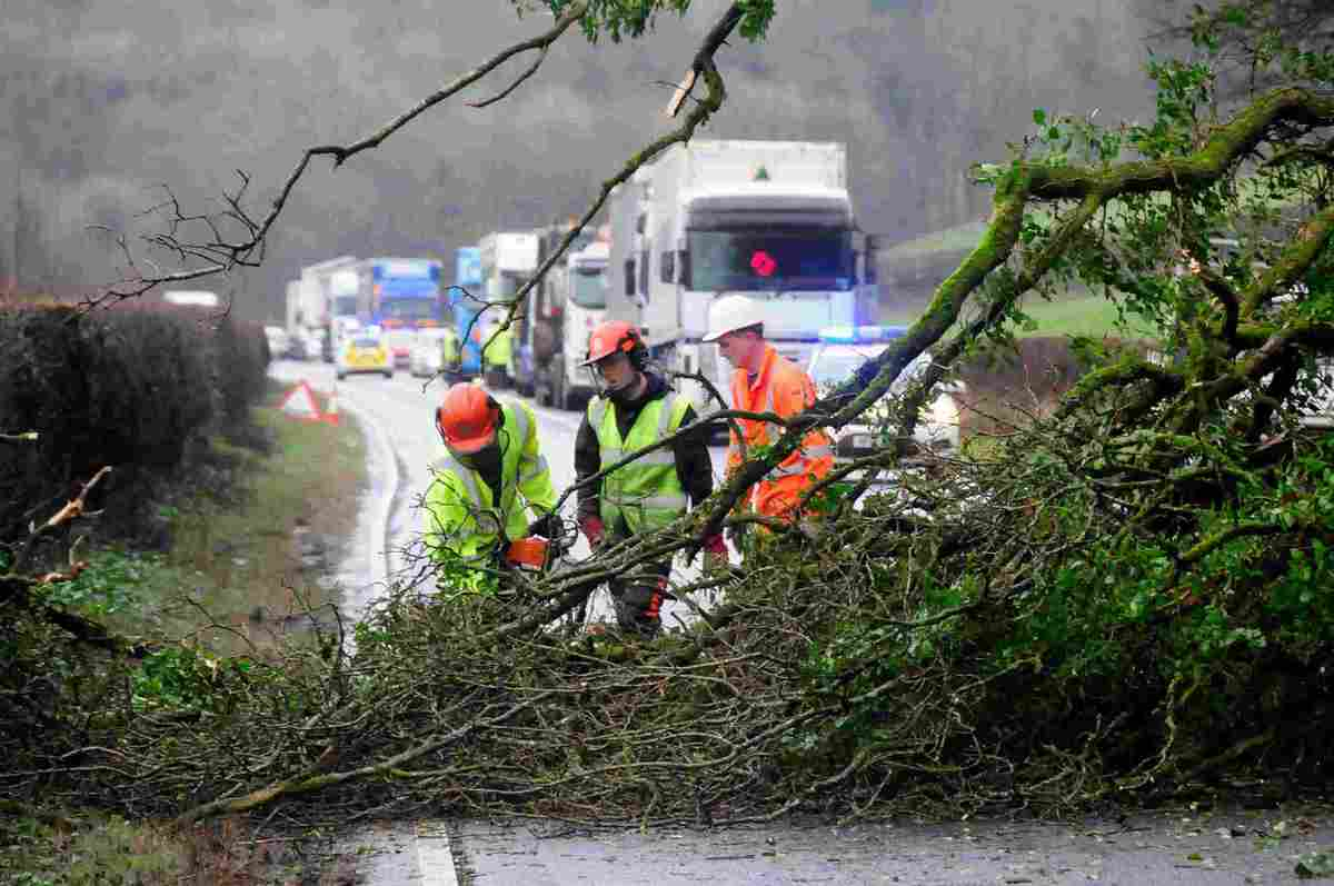BRANCH LINE: Workmen cut up the tree blocking the A35 West of Winterbourne Abbas