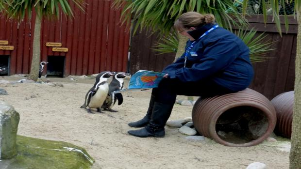 Penguins on World Book Day at Weymouth Sea Life Park