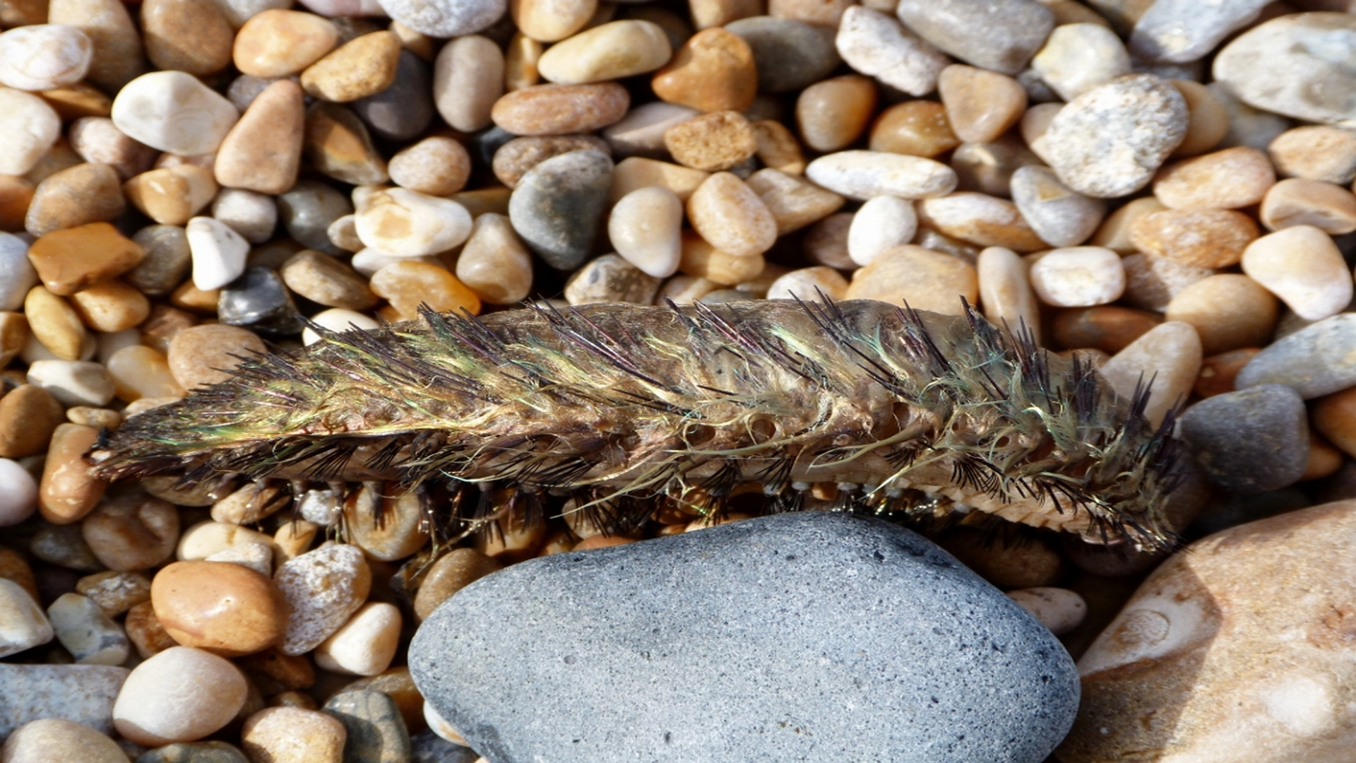 Rare sea creature washes up on Dorset beach