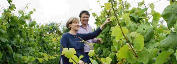 WORLDWIDE WINE: Rebecca Hansford and  Ian Edwards in the vineyard