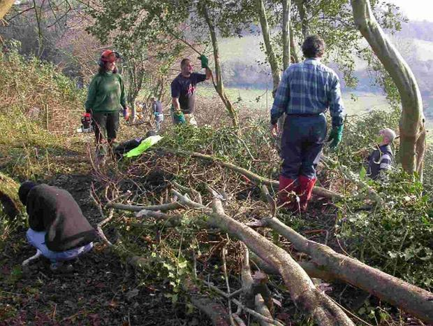 ON THE HEDGE: NT hedgelaying course at the Golden Cap estate