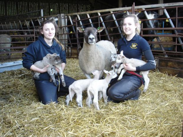 vet students Sophie Brown and Hannah Johnstone with the ewe and  lambs