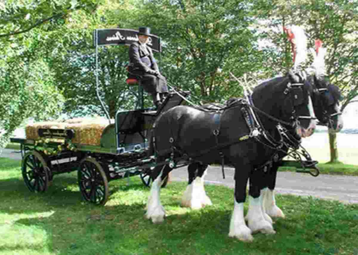 SPECIAL STATUE: The dray horses that will  transport the  dray horse statue