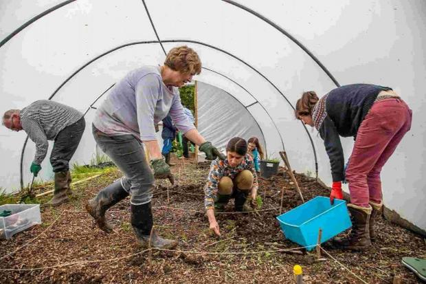 HERE WE GROW: Volunteers dig in