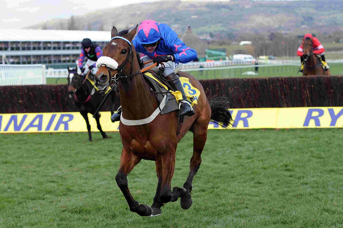 HONOURED: Joe Tizzard on board Cue Card to win the Ryanair Chase at Cheltenham l