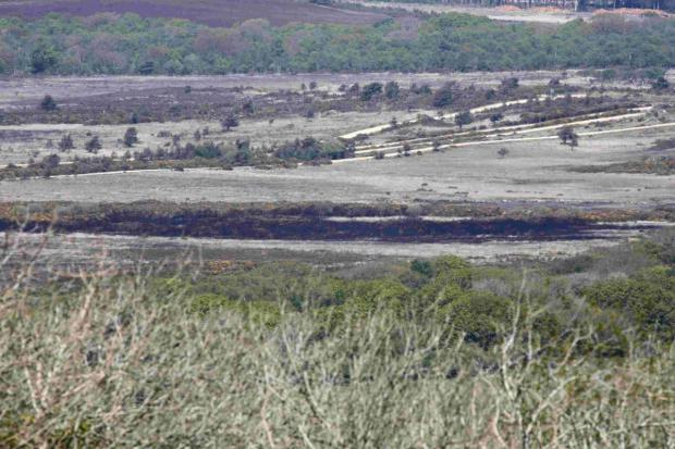 FIRE CONTAINED: Burnt heathland at Five Tips Firing Point at Lulworth Ranges
