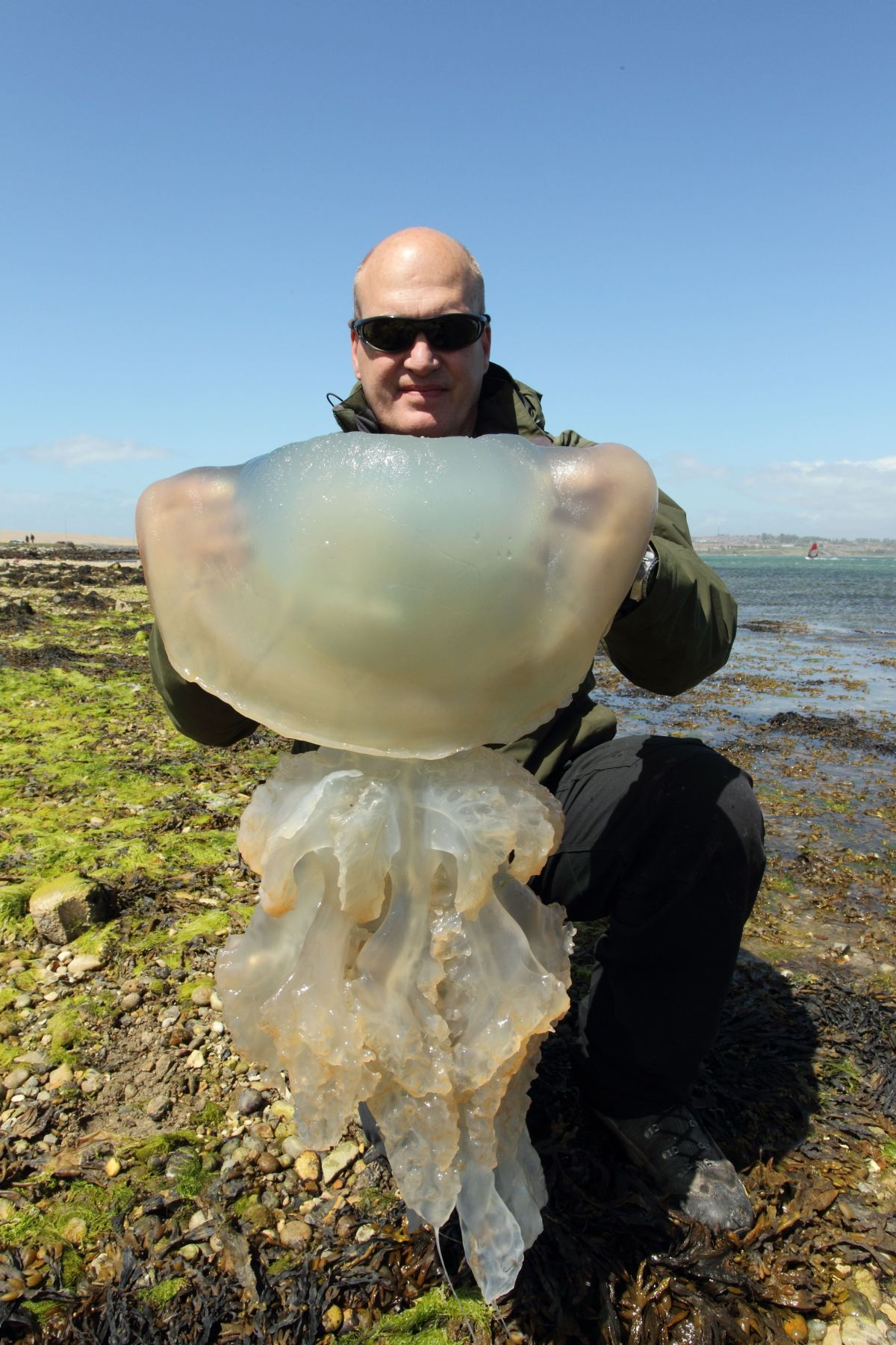 Steve Trewhella with one of the jellyfish