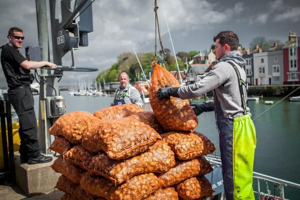 Welcome whelks into your life at the Dorset Seafood Festival