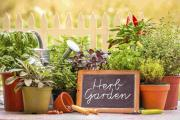 Home-grown herbs