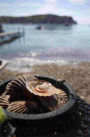 Toxic scallop alert - it could be fatal