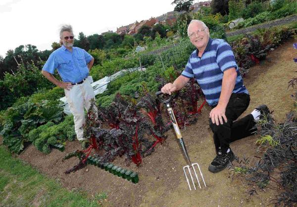 Free allotments for the green-fingered