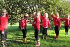 Pupils at Knighton House collect apples for the harvest